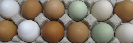 Chicken Eggs $5/dozen