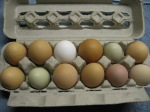 Eggs $3 dozen from the farm-available again in February