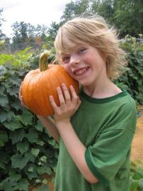 harvest of pumpkin