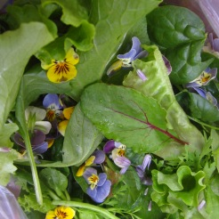 Violets in the salad greens