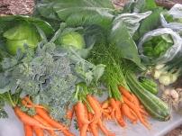 Vegetable CSA