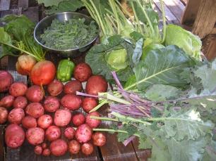 Late fall harvest-Vegetable CSA