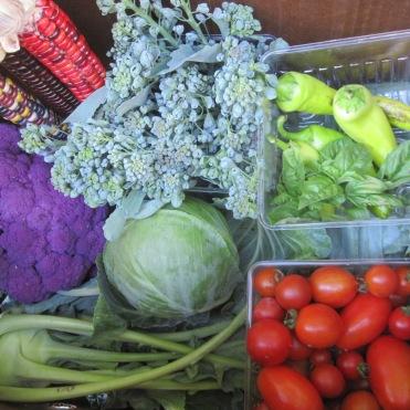 Fall harvest share for 1 week-Vegetable CSA
