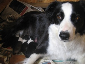 Rosie with new born puppies