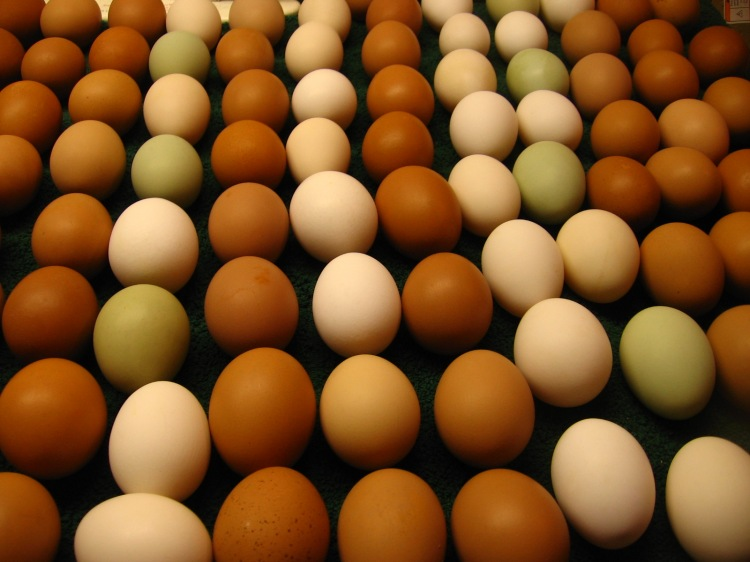 200 Eggs a Day!  Oh my!