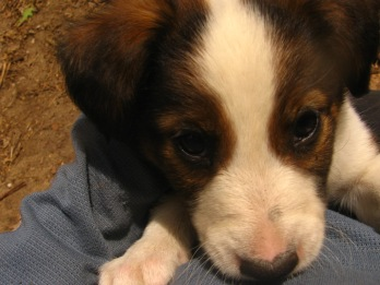 Puppies, Jack, and Loki 033