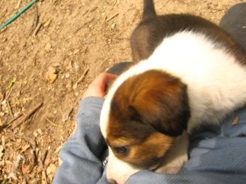 Puppies, Jack, and Loki 037