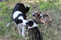 Rosie (Mama) with puppies