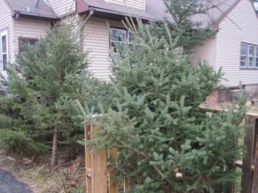 X-Mas Trees 273 smaller