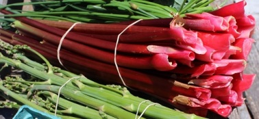 077 rhubarb smaller