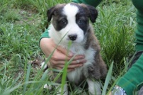puppies 091 smaller