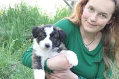 puppies 096 smaller